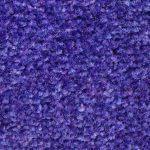 ColorStar Impressions 31